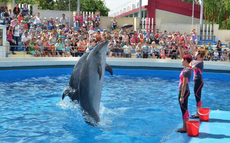 Návšteva odeského delfinária